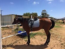 Wintech GP saddle adjustable gullet stretchable girth Whyalla Whyalla Area Preview