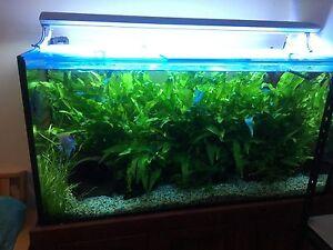 4x2x2 Fish Tank Aquarium with Sump and Stand Eleebana Lake Macquarie Area Preview