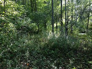Beautiful 5 Acre lot with woods and field by Trent River Belleville Belleville Area image 5