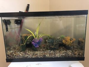 10 gallon tank with goldfish and accessories