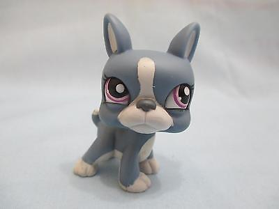 LITTLEST PET SHOP #1025 Blue BOSTON TERRIER Puppy Dog Purple Eyes 100% Authentic