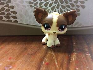 Littlest pet shop (LPS) Rare Chihuahua Mont Albert North Whitehorse Area Preview