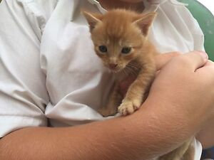 Kittens - free to good homes Narromine Narromine Area Preview