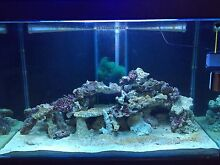 4x2x2 FISH TANK WITH MINI REEF & LIVE ROCK Sydney City Inner Sydney Preview