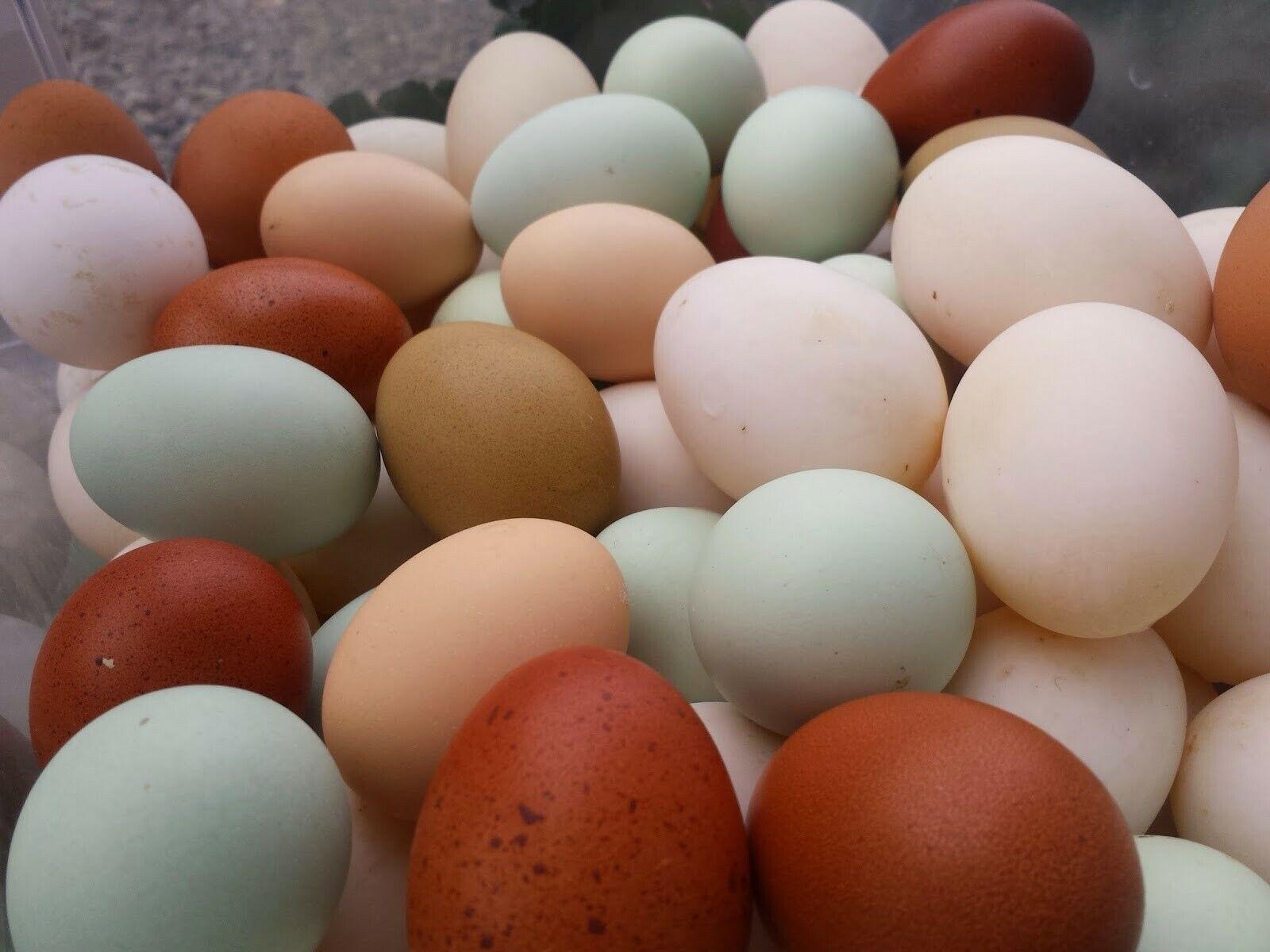 12 Fertile Chicken Hatching Eggs Barnyard Mix POSSIBLE GOLDEN LACED WYANDOTTE 3 - $12.00