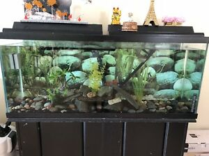 75 Gallon aquarium with stand