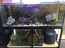 5ft Saltwater marine aquarium fishtank setup Mindarie Wanneroo Area Preview