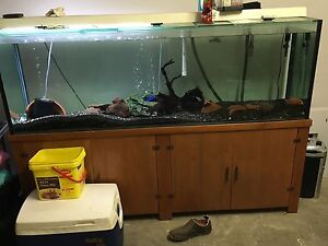 6ft fish tank and stand Manly West Brisbane South East Preview