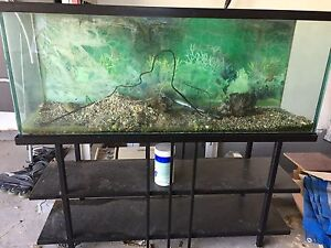 55 galling fish tank with stand