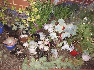Succulents variety! *Strong & healthy* Waterford South Perth Area Preview