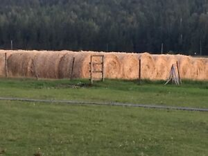 Reed-Canary Grass Hay Bales
