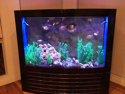Looking for a CHEAP second hand Aquarium?