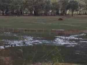 Adoption of Unwanted livestock/pets Heathcote Bendigo Surrounds Preview