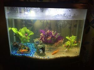 30 gallon tank with fish