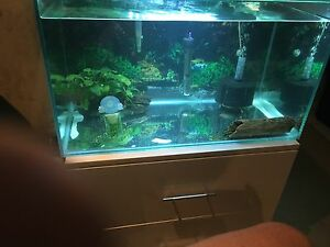 Full set up Aquarium with adult bristlenose pair Brookvale Manly Area Preview