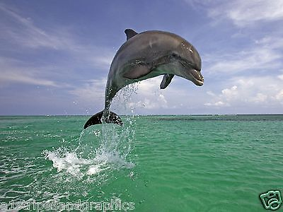 Dolphin #1 RV Trailer or Wall Mural FULL COLOR Decals Graphics Sticker Stickers