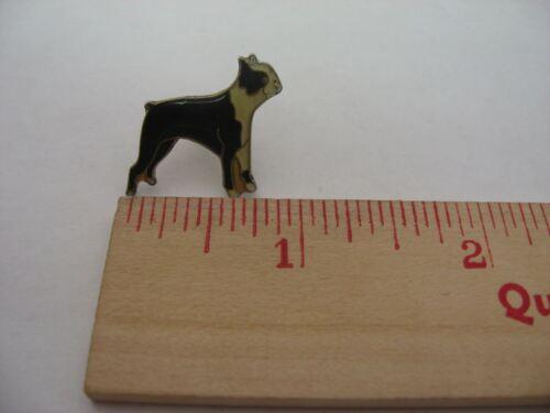 Chien bull terrier broche