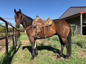 Grade 8yr Gelding For Sale
