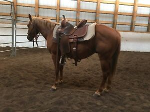 2 year old AQHA cowhorse Prospect
