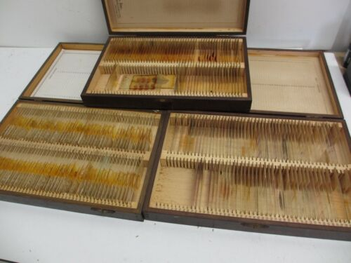 Vintage 1930-40s 240+ Boxed Microscope Slide Comparative Anatomy Biology Medical