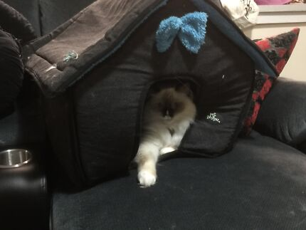 Soft, warm, cosy dog or cat kennel  Ashmore Gold Coast City Preview