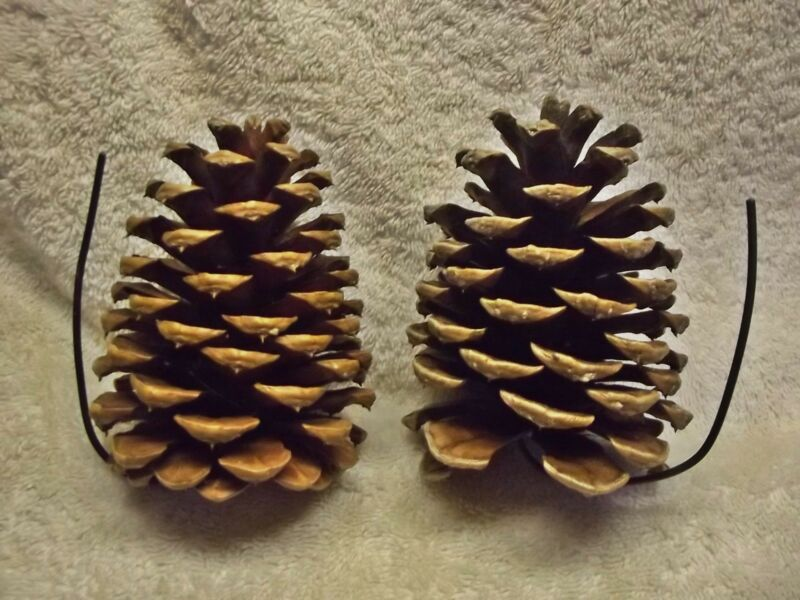 2X Geocache Containers (2) Pine Cone Micro Cache Sneaky Hide A Real Fave Grabber