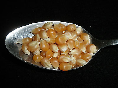 POPCORN, Seeds, Kernels, YELLOW, ORGANIC, NON-GMO, Bulk, Grown in USA FAST Ship! - Popcorn In Bulk