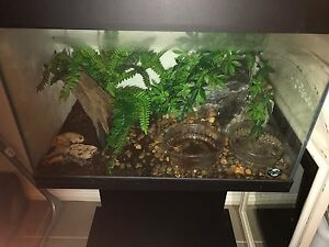 2 x Green Frogs Plus setup Richlands Brisbane South West Preview