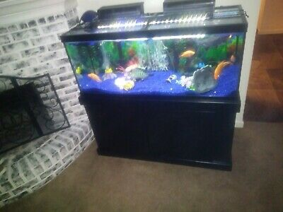 fish tank. 75 Gallon glass complete setup