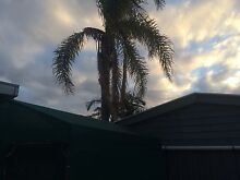 Hi Palms- Palm and tree pruning and removal Adelaide CBD Adelaide City Preview