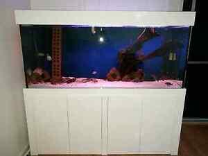 6x2x2.5ft Fish Tank Peakhurst Hurstville Area Preview