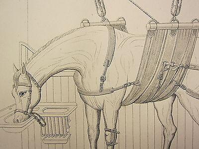 Animal Health & Veterinary Picard Horse Shoeing Nailing Hammer Farrier Forged Blacksmith Veterinarian Terrific Value
