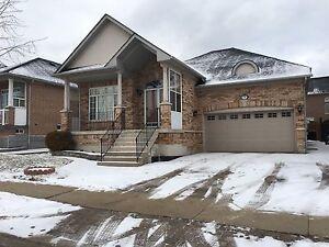 Beautiful Detatched Bungalow with Double car Garage in Vaughan