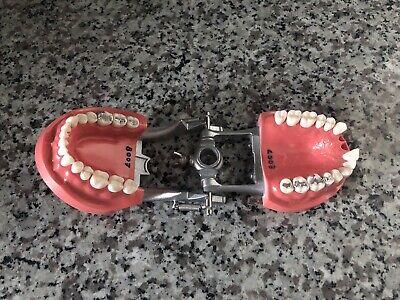Nissin Operattive Student Dentoform Dental Model Pro2001-ul-hd-dpm-32 Typodont