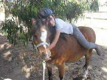 super first pony Smeaton Hepburn Area Preview