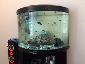 Fish tank Mountain Creek Maroochydore Area Preview