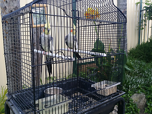 Pair of Cockatiel Parrots with Cage & Stand Liverpool Liverpool Area Preview