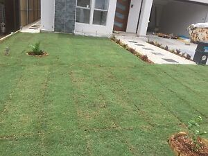 Cheap Grass Cutting Service Eastwood Ryde Area Preview