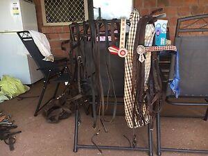 Show Horse Gear Beaudesert Ipswich South Preview
