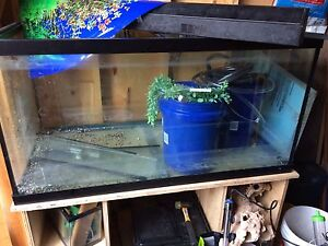 120G Aquarium, 2 Fluval 405 filters with homemade stand