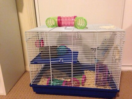 Cute mice (2) plus awesome cage Merrimac Gold Coast City Preview
