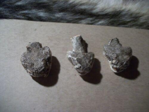 3 Real Western stuffed rattlesnake heads taxidermy craft man cave decor