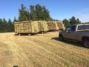 Square bales of hay for sale.