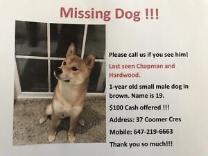 Lost Brown Dog - $100 offered!