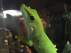 Reptiles for Sale (enclosures incldued)