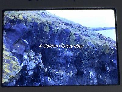 KITTIWAKES NEST SKOMER ISLAND WALES 35mm SLIDE PHOTO PICTURE VINTAGE PHOTOGRAPH