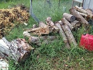 Free firewood Archerfield Brisbane South West Preview