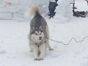 Dog Sitting Available