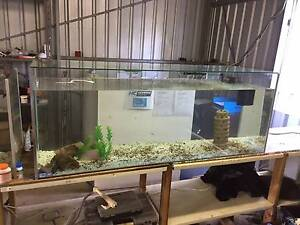 FISH TANKS DIRECT Brand New 450ltr Fish Tank 1 year wty Delivered Camira Ipswich City Preview