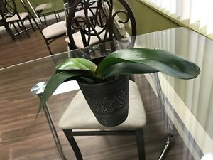 Healthy orchid plants (4)